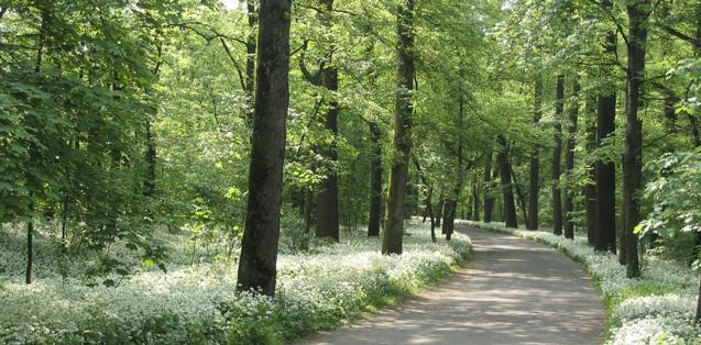 parco monza primavera fiori natura