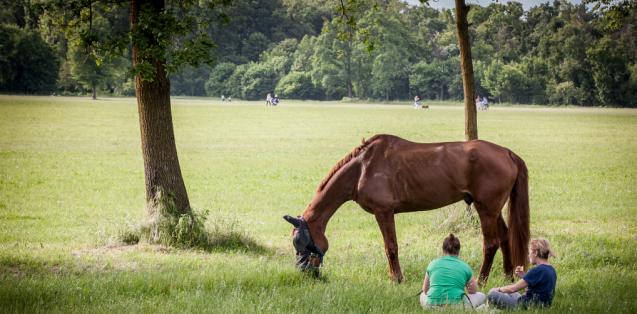 horse riding farm in monza park