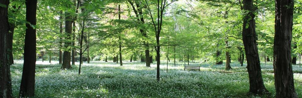 Primavera en Monza